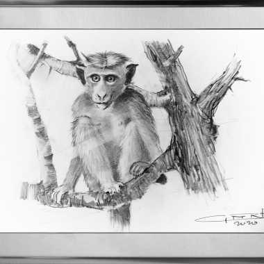 Thumbnail for Apen op Sri Lanka