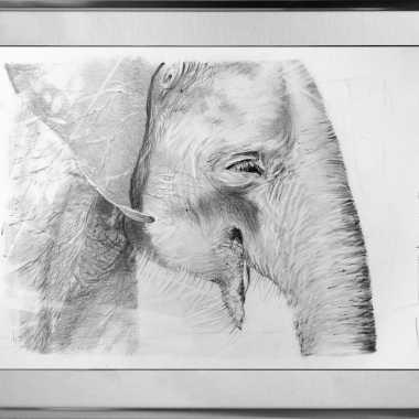 Thumbnail for Olifant in Sri Lanka